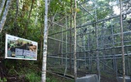 Peduli Kelestarian Satwa, PGE Area Lahendong Dukung Rehabilitasi Monyet Yaki di Tomohon
